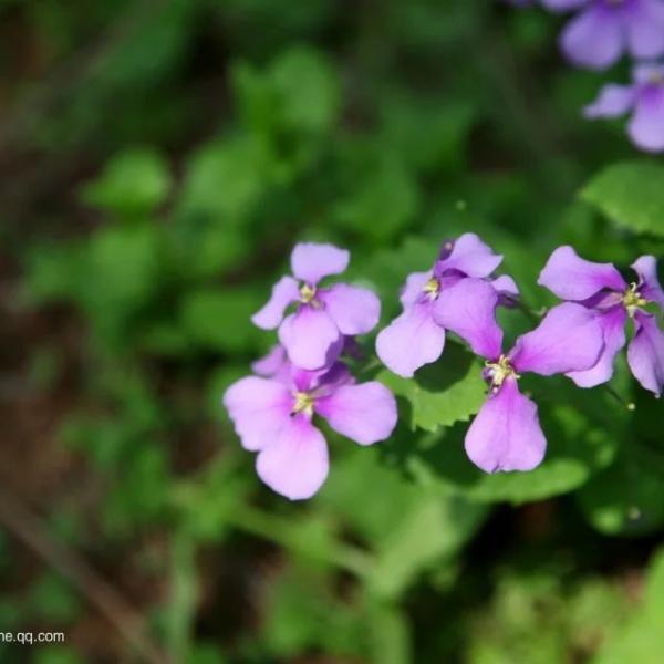 测试样张花卉摄影5