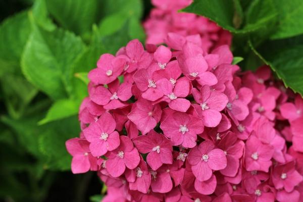 测试样张花卉摄影3