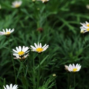 测试样张花卉摄影2